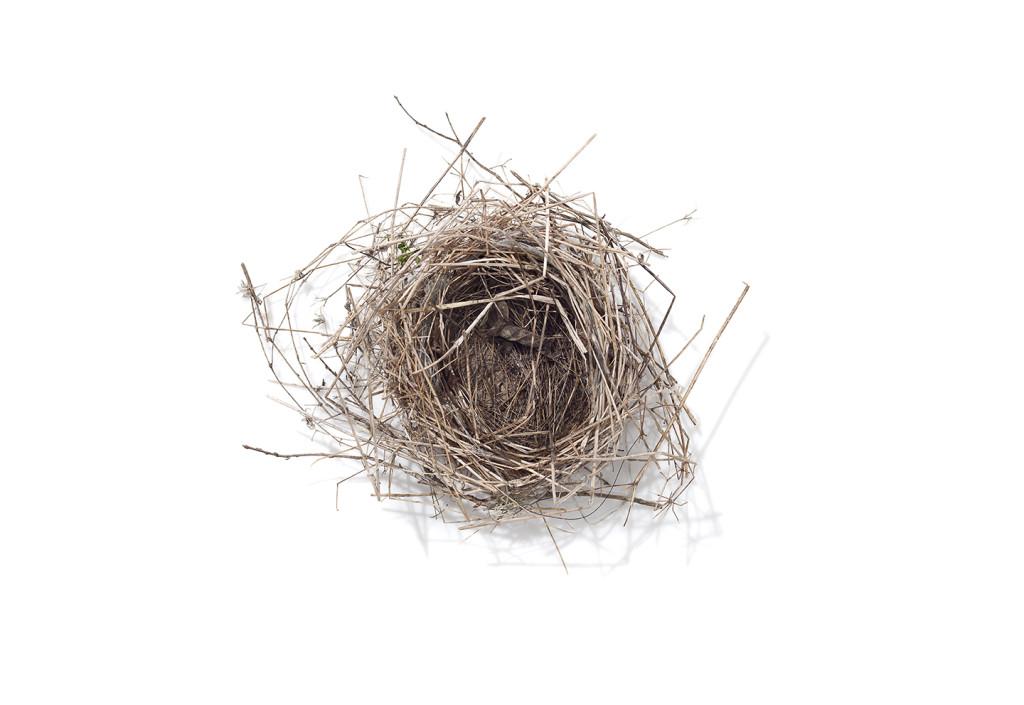 Nest7